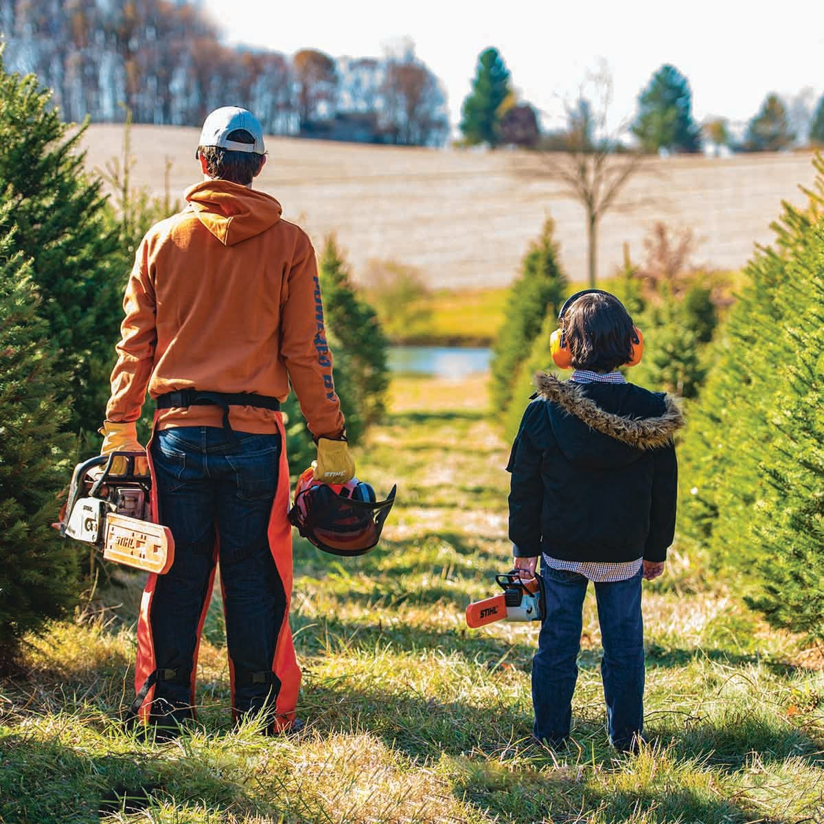 How To Choose A Christmas Tree: Tips From Expert    Arborist Mark Chisholm