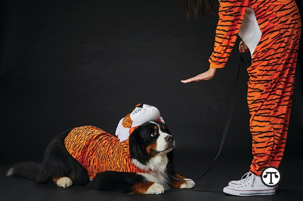 Five Ways To Treat Your Pet To A Spooky, Safe Halloween